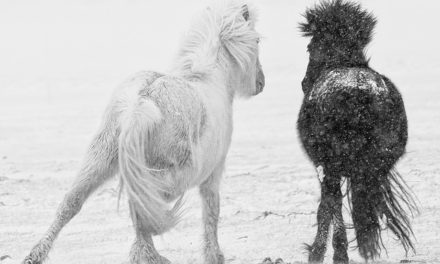 10  TIPS FOR STUNNING BLACK AND WHITE PHOTOGRAPHY